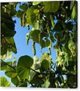 Sea Grapes In Summer Canvas Print