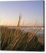 Sea Grass Overlooking The Harbor Canvas Print