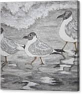 Sea Gulls Dodging The Ocean Waves Canvas Print