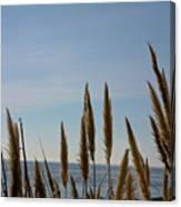 Sea Horse Tails Canvas Print