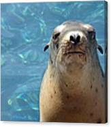 Sea Lion Or Seal Canvas Print