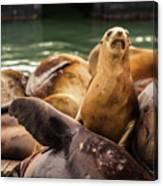 Sea Lion Pup Canvas Print