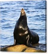 Sea Lion Sing Canvas Print