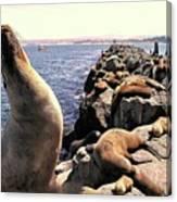 Sea Lions On Rock Pier Canvas Print