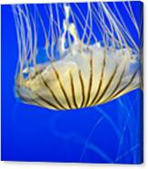 Sea Nettle Canvas Print