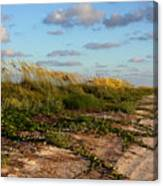 Sea Oats Along The Beach Canvas Print