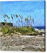 Sea Oats And Coastline Canvas Print