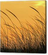 Sea Oats At Dusk Canvas Print