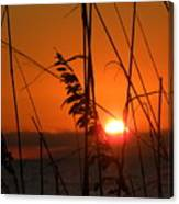 Sea Oats At Sunset Canvas Print