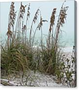 Sea Oats In Light Fog Canvas Print
