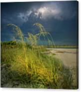 Sea Oats In The Storm Canvas Print