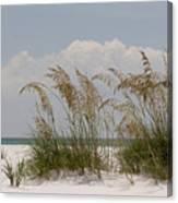 Sea Oats On A White Sandy Beach Canvas Print