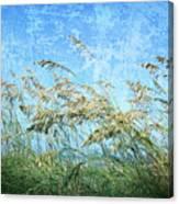 Sea Oats One Canvas Print
