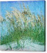 Sea Oats Two Canvas Print