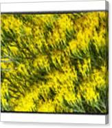 Sea Of Yellow Canvas Print