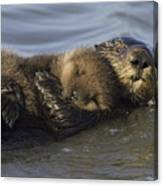 Sea Otter Mother With Pup Monterey Bay Canvas Print