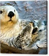 Sea Otter Portrait Canvas Print