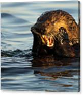 Sea Otter With A Toothache Canvas Print