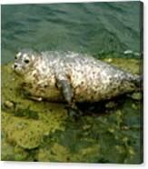 Sea Pup Canvas Print