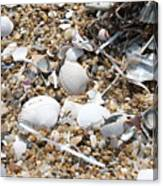 Sea Ribbons And Shells Canvas Print