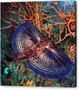 Sea Robin The Flying Gurnard Canvas Print