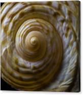 Sea Shell Beauty Canvas Print