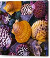 Sea Shells And Sea Glass Canvas Print
