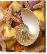 Sea Shells And Starfish Canvas Print