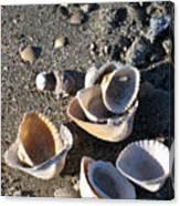 Sea Shells At Folly Beach In Charleston Sc Canvas Print