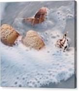Sea Shells In A Wave Of Foam Canvas Print