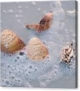 Sea Shells In An Ocean Wave Canvas Print