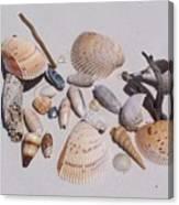 Sea Shells On White Sand Canvas Print