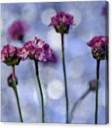 Sea Thrift Blossoms Canvas Print