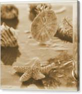Sea Treasure -sepia Canvas Print