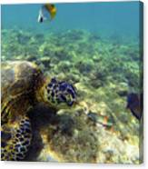 Sea Turtle #1 Canvas Print