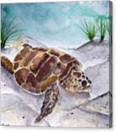 Sea Turtle 2 Canvas Print