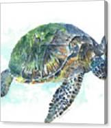 Sea Turtle #20 Canvas Print