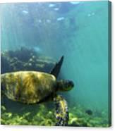 Sea Turtle #5 Canvas Print