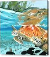 Sea Turtles Canvas Print