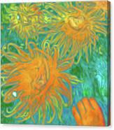 Sea Urchin 10 Canvas Print