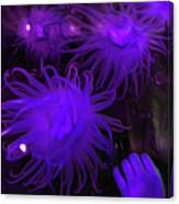 Sea Urchin 8 Canvas Print