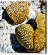 Sea Urchin Puzzle Pieces Canvas Print