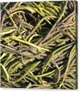 Sea Weed Cluster Canvas Print