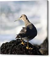 Seabird Canvas Print