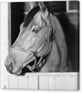 Seabiscuit 1933-1947, In His Stall Canvas Print