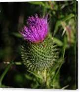 Seacoast Wildflower I Canvas Print