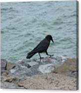 Seafaring Crow Canvas Print