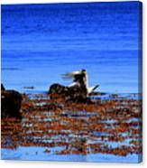 Seagul Landing Canvas Print