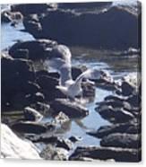 Seagull 11 Canvas Print
