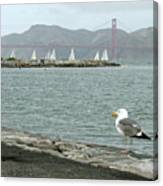 Seagull And Golden Gate Bridge Canvas Print